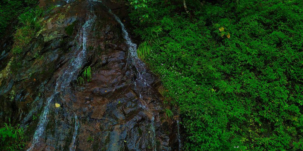 Valparai shola stream