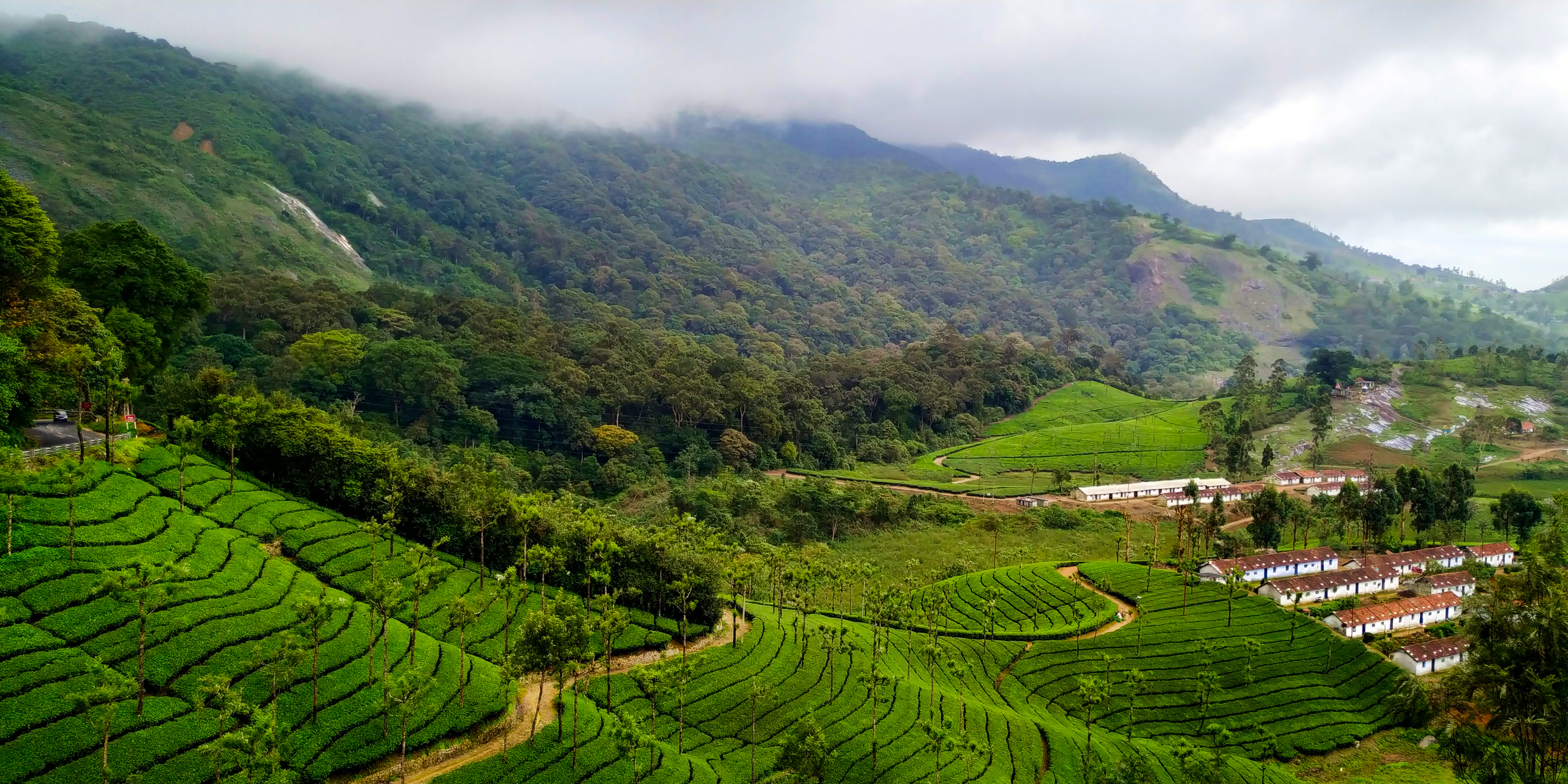 valparai shola and tea plantations - www.happybotanist.com