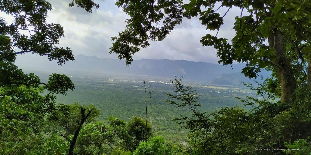 Seeing through the canopy - Velliangiri Hills
