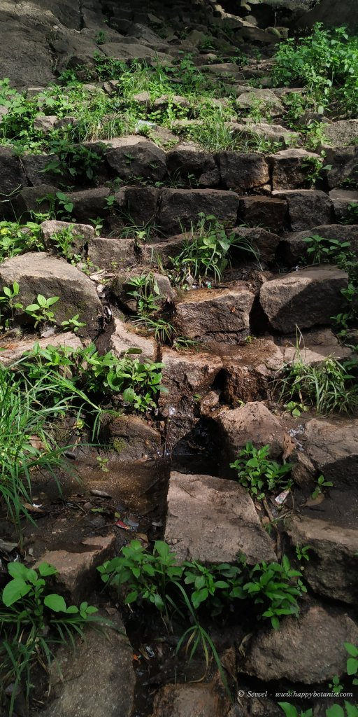 Water seeping through the steps in Velliangiri Hills