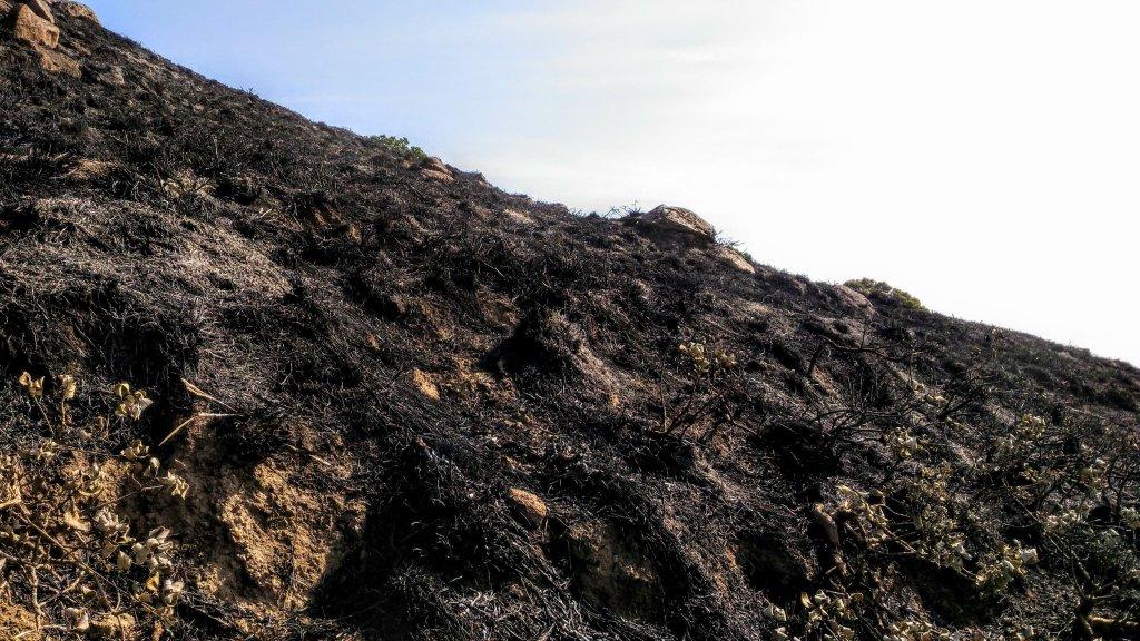 burnt grasslands - Velliangiri hills