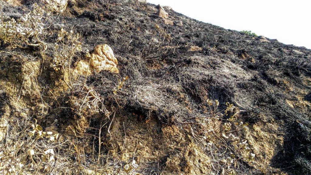 Burned down grasslands - Velliangiri hills